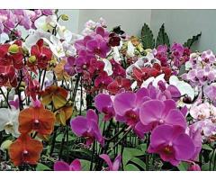 Dobronak Orchideafarm és Energiapark, városnézés Mariborban.