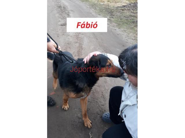 Sintér elől mentett  Fábiónak keresünk gazdát sürgősen!