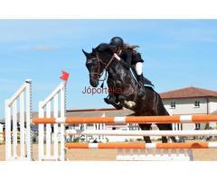Sportoktató (lovaglás) OKJ-s tanfolyam Kecskeméten