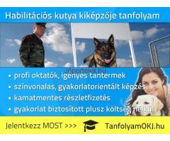 Habilitációs kutya kiképzője OKJ-s tanfolyam Budapesten